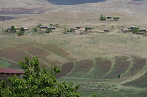 Agricultural production dropped 70 per cent in the 2011/12 cropping season, Lesotho's worst harvest in ten years.