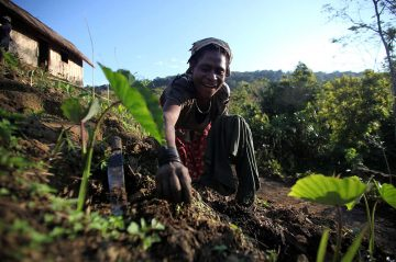 Drought-resistant crops in PNG