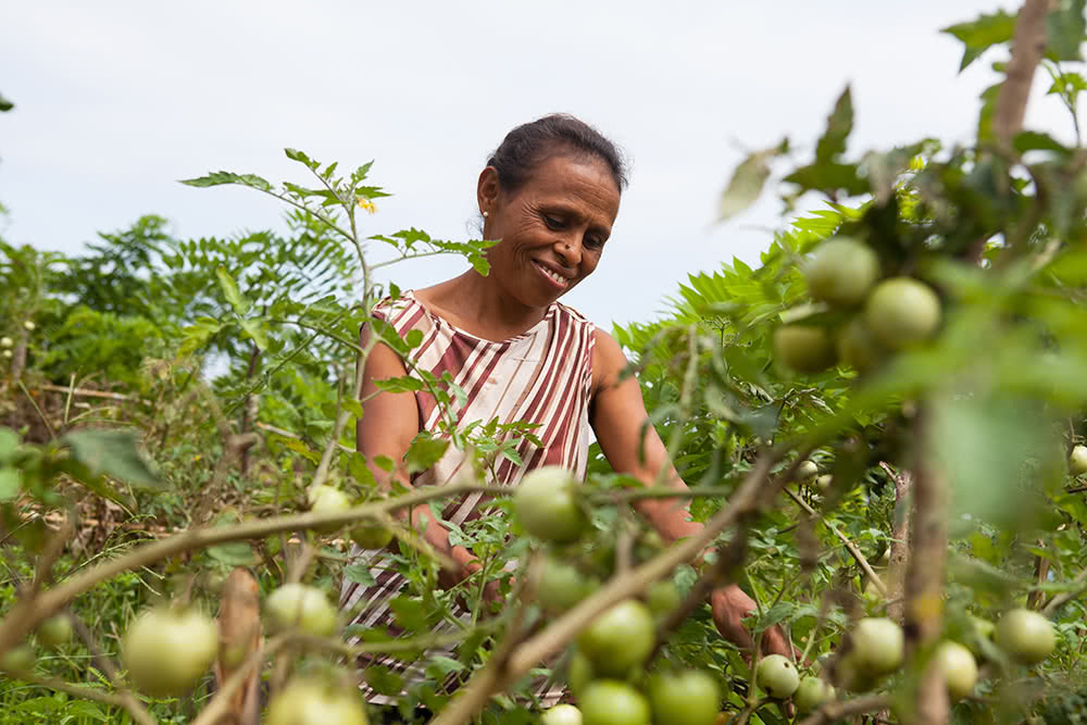 Farmer in Timor-Leste