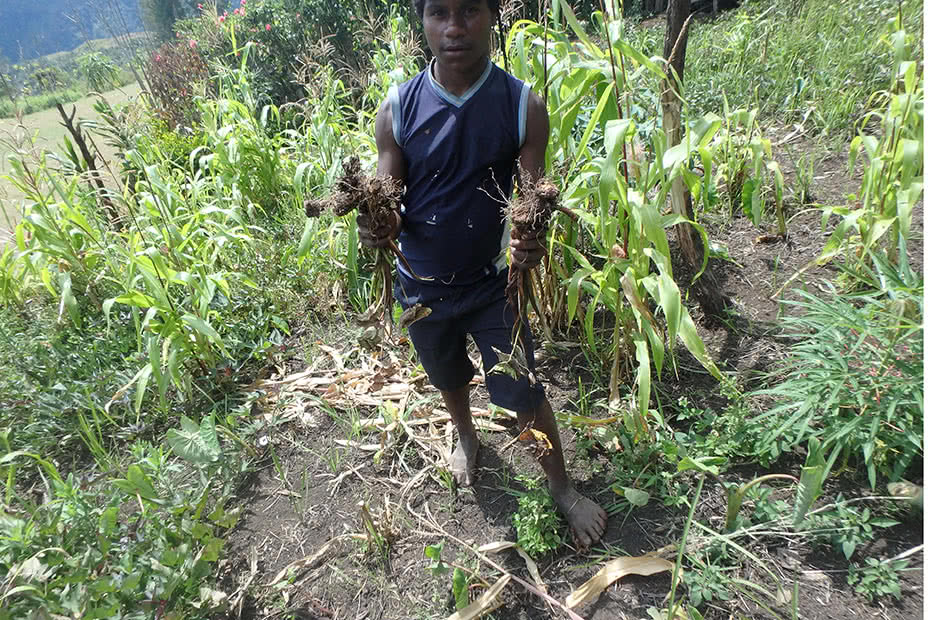 A man holds up a meagre crop harvest in Papua New Guinea,